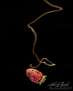 A long exposure of a fruit fly illuminated by a shaft of light as the fly approaches a fermenting strawberry in a wind tunnel.