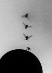 A Landing Fly.